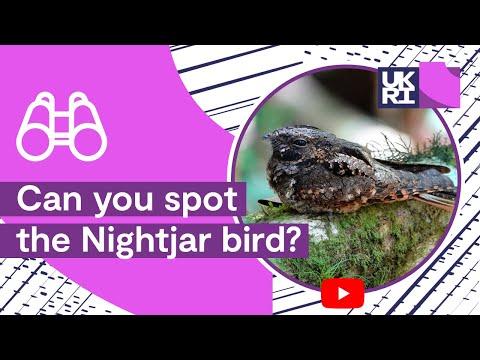 Gdzie jest ptak?