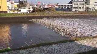 Video Amatir Gempa Bumi Fukushima Jepang Tsunami November 2016