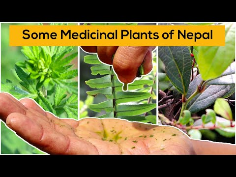 , title : 'Some medicinal plants of Nepal and their uses - HASERA Organic Farm