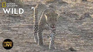 Safari Live - Day 241 | Nat Geo Wild
