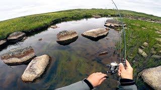 Рыбалка на север кольского полуострова