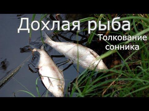 Дохлая рыба - толкование сонника
