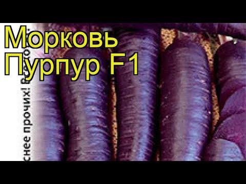 Морковь (Пурпур F1). Краткий обзор: Морковь описание характеристик, где купить семена