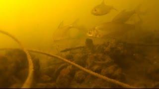 Прикормка для рыбы бетаин