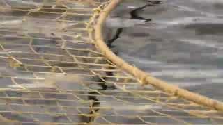 Ловля рыбы на трал в океане