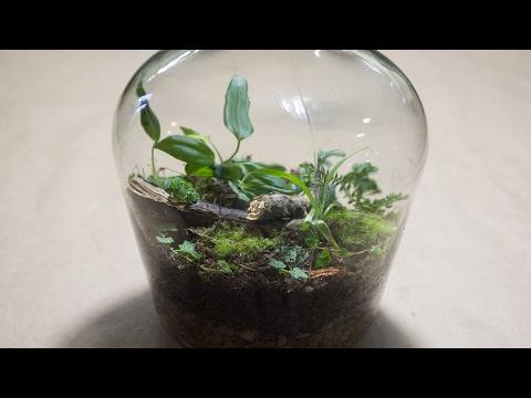 Making a Bottle Terrarium + Closed Terrarium Basics