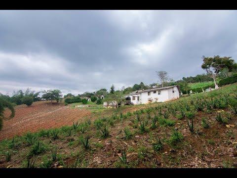 Fincas y Casas Campestres, Venta, Dagua - $690.000.000