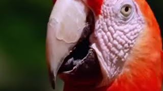 Macaw - Nutrition