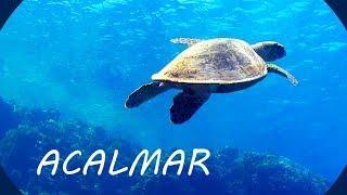 Música Relaxante e Fundo do Mar 🎵 Acalmar a Mente