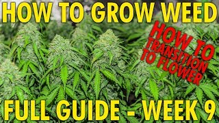 How to Transition Your Plants Into Flower - Cannabis Grow Guide Week 9