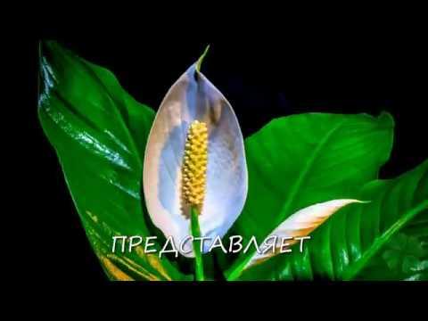 Лучшие комнатные растения для дома