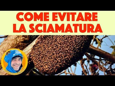 , title : '11 apicoltura: 2 tecniche per evitare la sciamatura. Istruzioni principiante ( 2021 )
