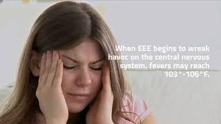 EEE Virus 2019: Facts, Symptoms, and Natural Prevention EEE Virus 2019