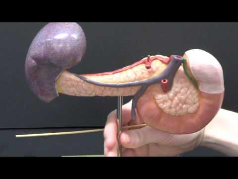 Differentialdiagnose der arteriellen Hypertonie