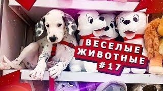 Смешные видео с животными #17 Fun video with animals #17
