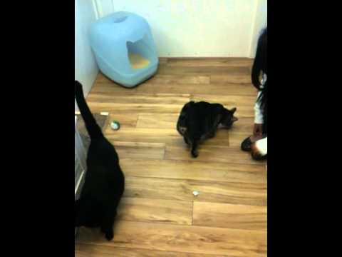 Marin Cat Boarding Hotel: KITTY CHARM SCHOOL ROCKS!