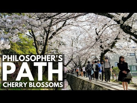 Philosopher's Path (Walk) Cherry Blossoms Kyoto   VEDA DAY 3   Japan Vlog 45   Lin Nyunt