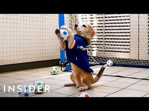 Meet the World Record Holding Dog Goalie
