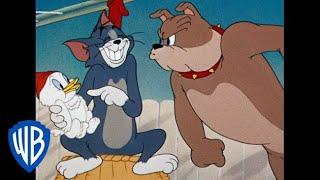 Tom & Jerry em Português | Compilação de Animações Clássicas | Tom, Jerry e Spike | WB Kids