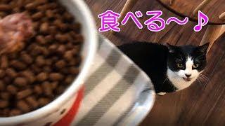 猫の朝ゴハンおねだりがかわいい&朝食のソーセージ