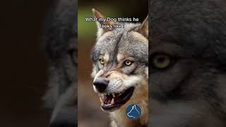 Dogs funny video ???????????? #shorts #dogtuber #fpv