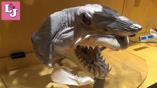 Интерактивный Аквариум Испания Aquarium Finisterrae Угадываем птиц Голова Акулы Огромная устрица