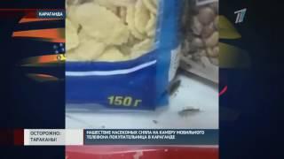 В одном из супермаркетов Караганды покупательница засняла нашествие тараканов