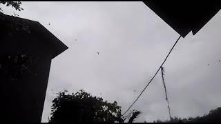 preview picture of video 'Rumah idaman walet di kalbar'