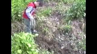 preview picture of video 'Pescando anguila en Puebla de Don Rodrigo'