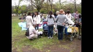 2015-04-12 Yoyogi Park