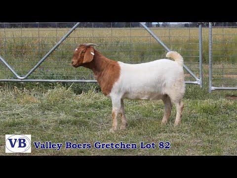VALLEY BOERS GRETCHEN