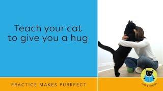 Cat Trick: Teach Your Cat To Hug