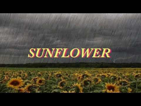 Sunflower -Allie X (LYRIC VIDEO) FROM Sierra Burgess Is A Loser 🌻🌹