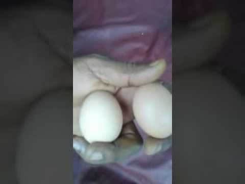 Fake Eggs Being Circulated In Nigeria