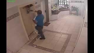 Chien vs Ascenseur : il échappe à la mort !