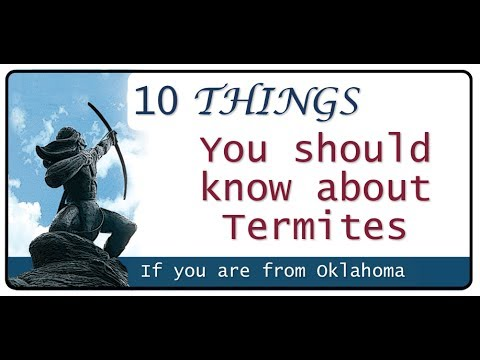 5 Things you should know about Termites