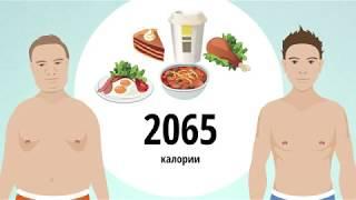Основные принципы правильного питания для поддержания оптимального веса