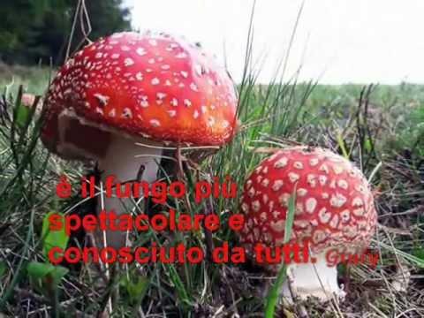 Unguento di targhe per uomini da funghi sessuali