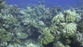 preview picture of video '20121005 diving22 Cement Reef'