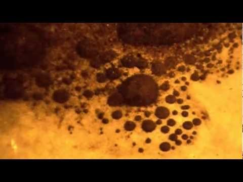 Riff Cassidy's Cymatic Zombies! Official Scrapie Justice Video with Cymatics