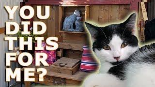 Full Tour Of Juchuskyni Kitty Park: Unique DIY Cat Enclosure