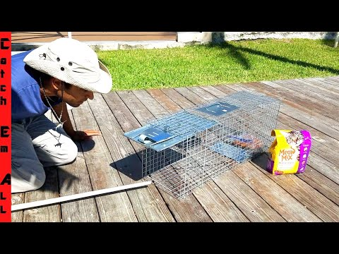 BUILDING TRAP for a FISH STEALING RACOON!
