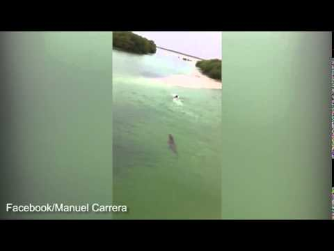 Swimmer narrowly escapes from huge crocodile in Mexico