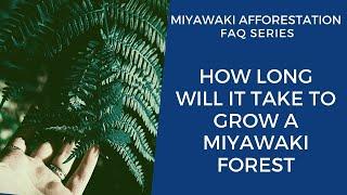 How Long Will It Take To Grow A Miyawaki Forest?