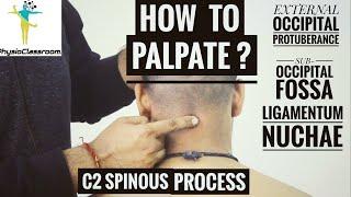 CERVICAL SPINE PALPATION : PART-1