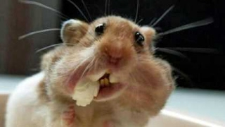 TRY TO HOLD YOUR LAUGH CHALLENGE - Super funny ANIMAL videos!