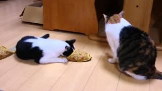 家に入れた捨て猫ちゃんたち20150718