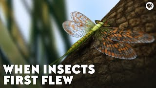 When Insects First Flew