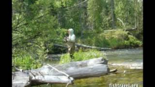 Ловля рыбы в августе на байкале