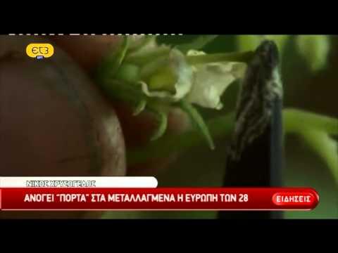 Ανοίγει η πόρτα για τα μεταλλαγμένα από την ελληνική Προεδρεία